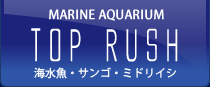 MARINE AQUARIUM TOP RUSH
